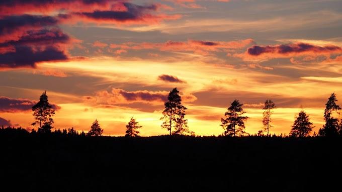 Pôr do Sol, Árvores, Silhuetas, Nuvens, Entardecer