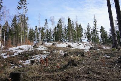 Szczyt Straconki ogołocony nieco z drzew