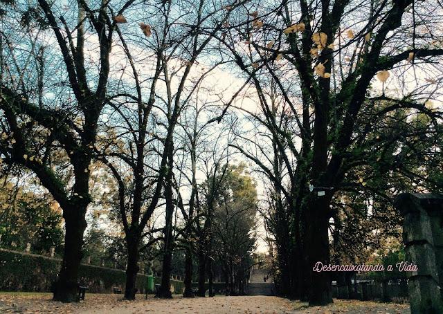 Desencaixotando a Vida Vale das Tílias durante o inverno- Jardim Botânico da Universidade de Coimbra