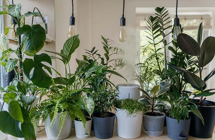 Pandangan Pakar Mengenai Tanam atau Letak Pokok Hiasan Dalam Rumah