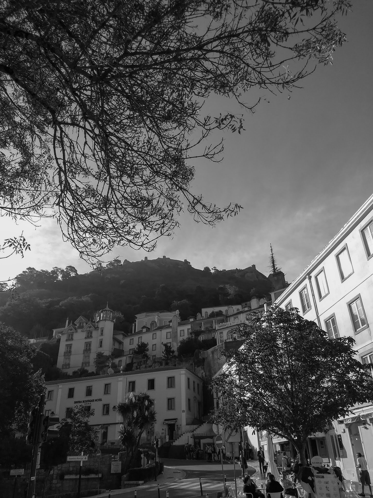 Black and white capture of mountainside Sintra under a tree.