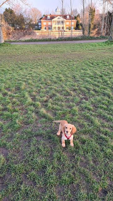 Dog walks routes nottingham
