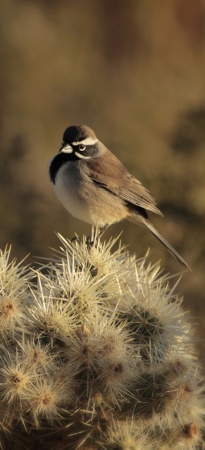 A bird on a desert cactus.