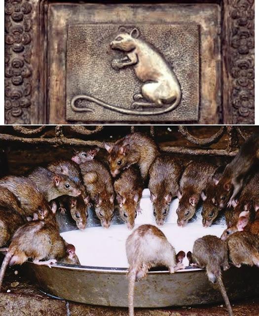O ossuário de sedlec, catacumbas dos capuchinhos, o templo dos ratos, lago natron, a ilha das bonecas, as cavernas da morte, museu da morte, catacumbas de paris, musei siriraj, mercado dos feiticeiros, atrações turísticas