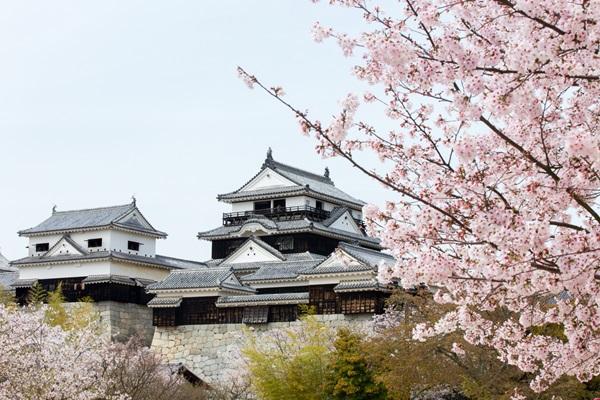 ปราสาทมัตสึยามะ (Matsuyama Castle: 松山城)
