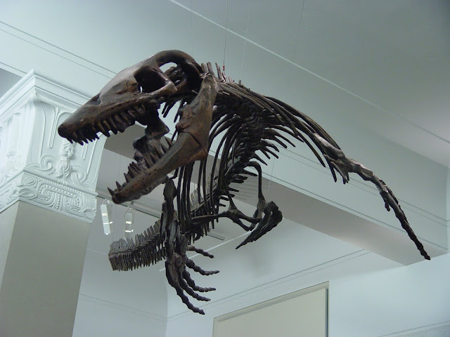 Skeleton of a Mosasaur