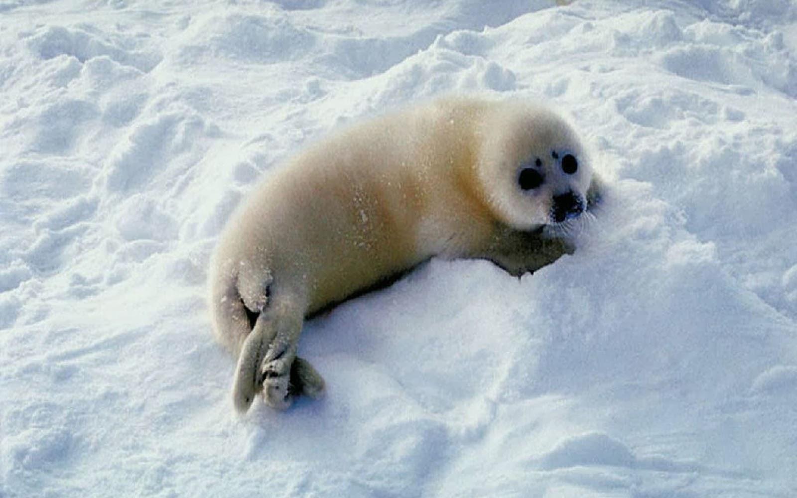 Welche Tiere Leben In Der Arktis