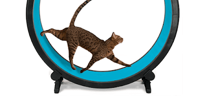 Benefits of Exercise Wheel for Cats