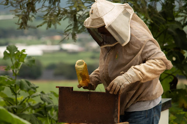 When To Harvest Honey