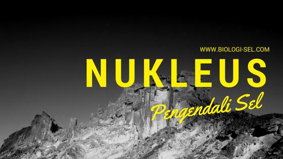 Nukleus atau inti sel
