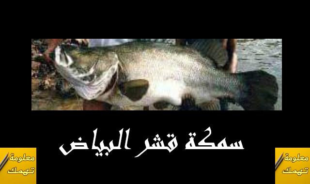 سمكة قشر البياض