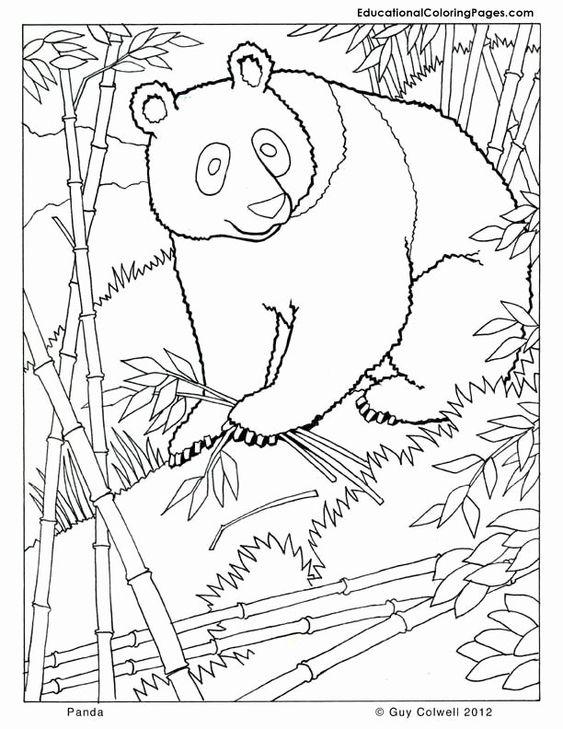 Tranh tô màu con gấu trúc trong rừng trúc