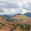 La Sal Mountains Fall Foliage