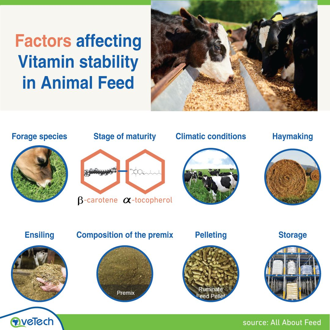Factors affecting vitamin stability in animal feed. 🐄🐂  ▪️ Forage species Grasses have the lowest level of ᵦ-carotene.  while legumes have the highest level.    ▪️ Stage of maturity The levels of ᵦ-carotene and 𝛼-tocopherol in the grasses and legumes are very high in the young stages and reduce as the plant matures.    ▪️ Climatic conditions a forage is richer in ᵦ-carotene and 𝛼-tocopherol is in conditions with a low temperature.    ▪️ Haymaking Drying crops either on the ground or in barns reduces the vitamin levels.    ▪️ Ensiling Stability of some vitamins such as vitamin A may be adversely affected if mouldy or spoiled silages are fed for long periods.    ▪️ Composition of the premix The type of trace mineral can have a significant effect on vitamin stability.    ▪️ Pelleting Pelleting is typically the most aggressive process against vitamins due to exposure to heat.    ▪️ Storage Premixes containing vitamins can be stored for about 3 to 4 months.