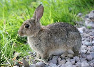 Mitos Tentang Memelihara Kelinci