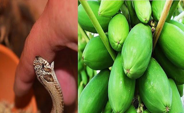 Loại cây giải độc khi bị rắn cắn, côn trùng đốt, ngộ độc thực phẩm