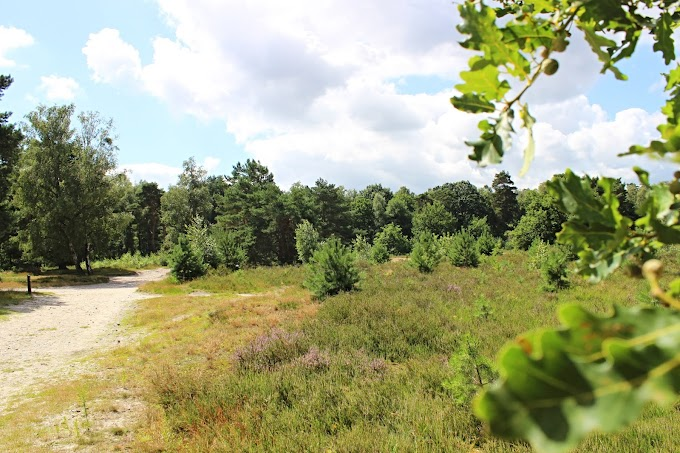 Leuke wandeling van 5 kilometer op de Limburgse Brunssummerheide