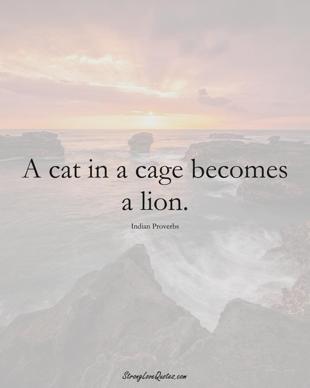 A cat in a cage becomes a lion. (Indian Sayings);  #AsianSayings