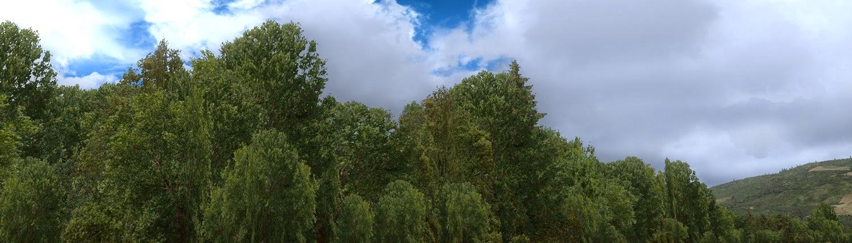 Download FTX Trees HD #FSX