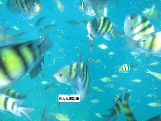 Pulau Harapan; Pulau Seribu; Snorkeling di Pulau Harapan; Pulau Gosong; Pulau Perak; Pulau Bulat; Homestay di Pulau Harapan; Penginapan di Pulau Harapan; Homestay murah di Pulau Harapan, jelajah pulau