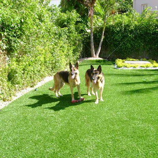Greatmats artificial turf for dog daycares and dog training