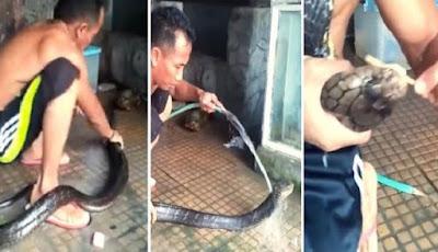 Pria memandikan ular king kobra