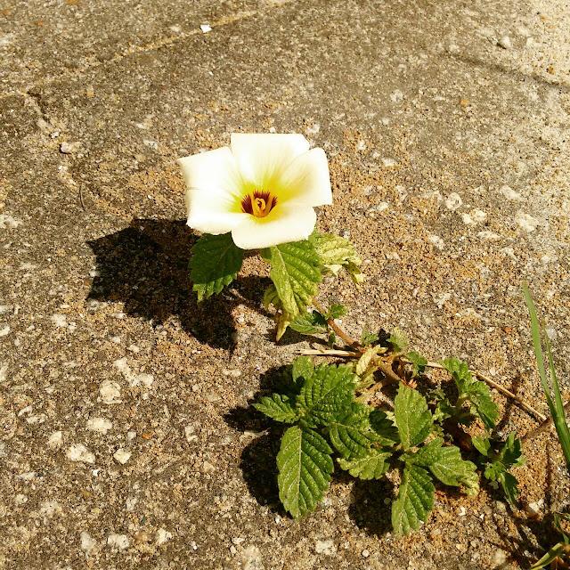 Flores, luciana ravaglia, poesia, pensamentos valem ouro. blog literário, poemas, café poético