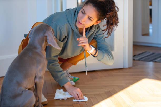 Dog Training Basics – Preventing Problem Urination