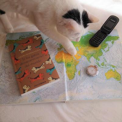 gatos-desaparecieran-mundo