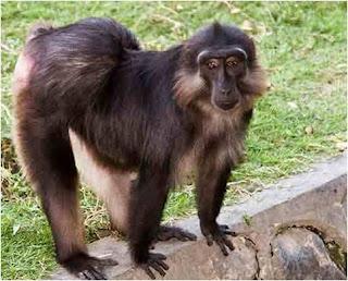 Kera itu monyet besar, tidak mempunyai ekor dan badanya ada yang bisa besar seperti Gorila