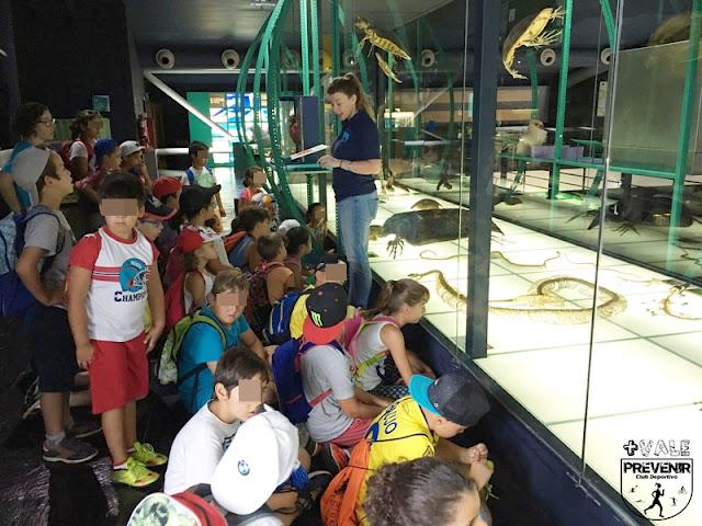 museo elder escuela verano arucas 14