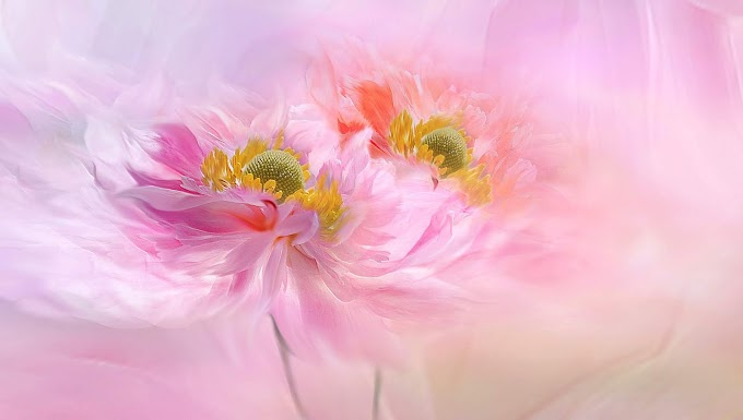 Imagem de Flores Rosas Lindas