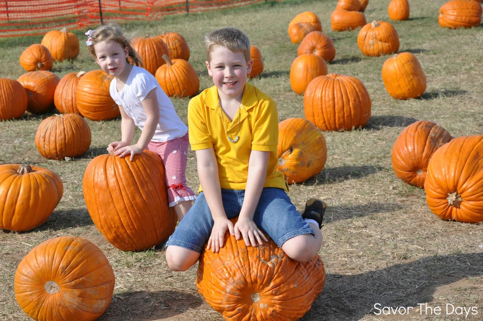 My Pumpkins at the Pumpkin Patch