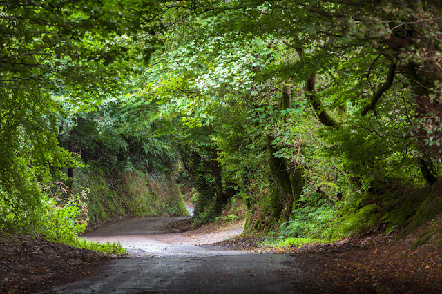 Exmoor National Park country lane beneath a lush green canopy of leaves