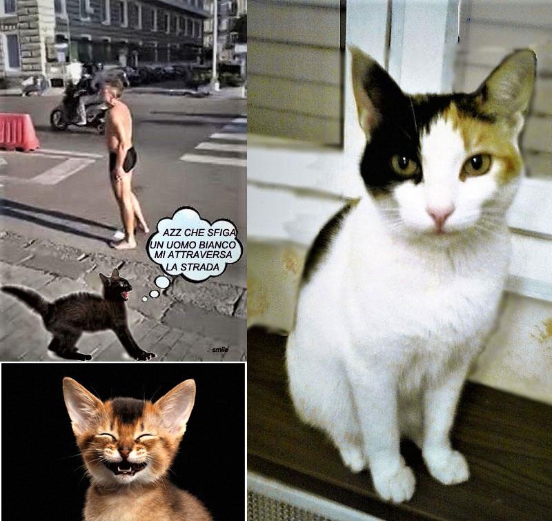 Amici In Allegria Giornata Del Gatto