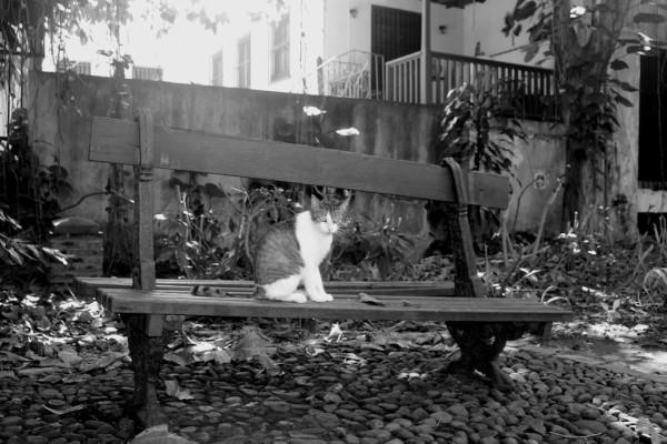 old san juan bench