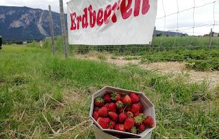 حقول,نمساوية,تتخلص,من,محصولها,بمساعدة,عامة,الناس