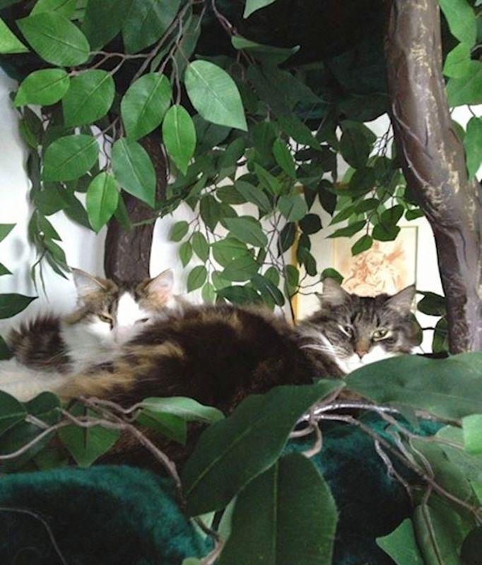 Luxury Pet Trees