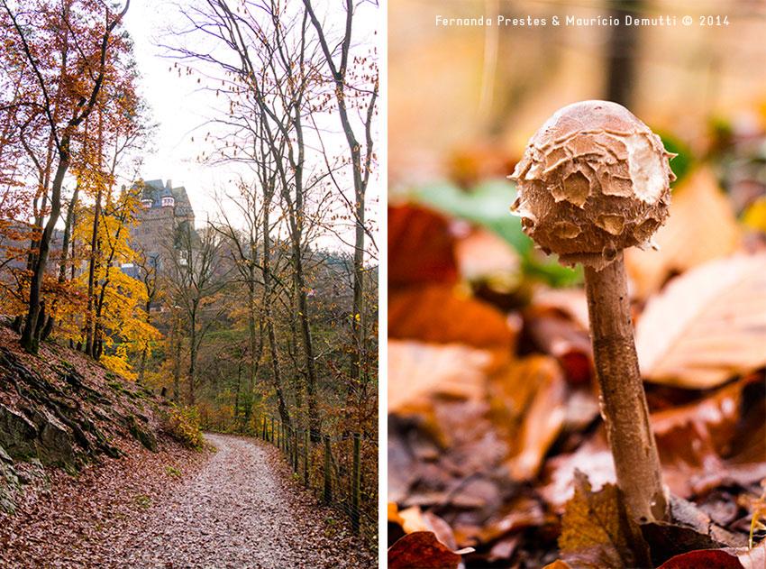 caminho do castelo de Burg-Eltz e cogumelo