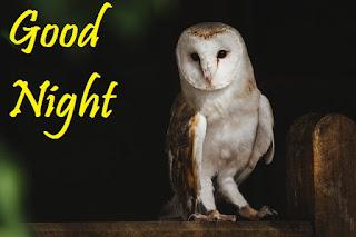 good night birds photos