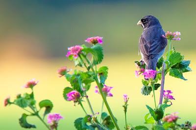 Resultado de imagem para passarinhos no campo