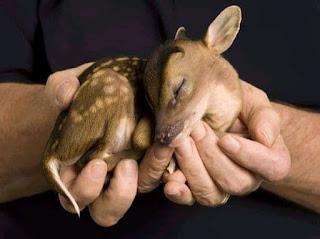 gambar anak rusa imut
