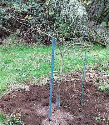 Growing Greener In The Pacific Northwest Transplanting A