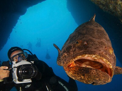 Mero, o maior peixe ósseo do Atlântico Sul