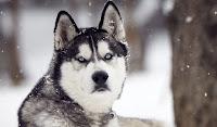 cachorro informativo