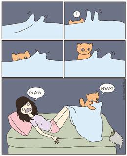 gato-curiosidad-ataque-traicion