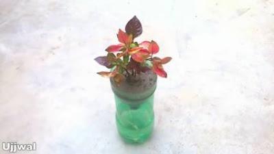 Cara Membuat Pot Bunga dari Botol Plastik