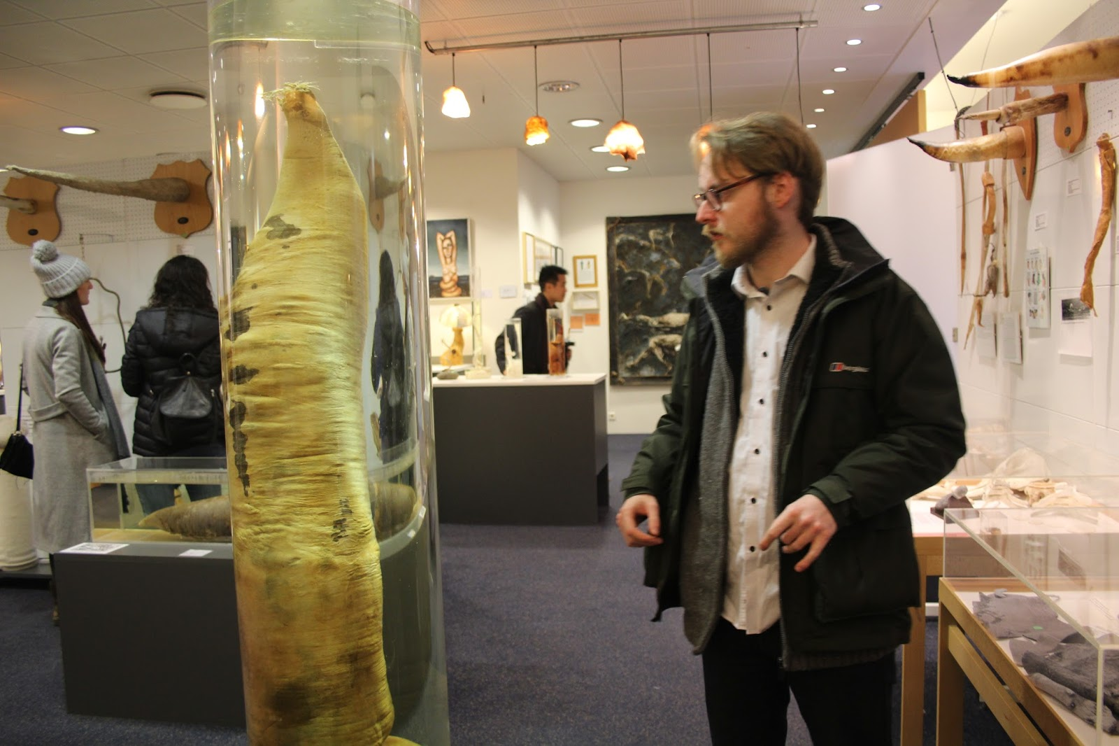 A whale penis on display