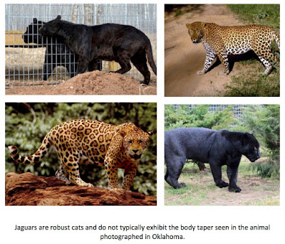 Big Cat Rescue is caring for big cats and ending the trade.