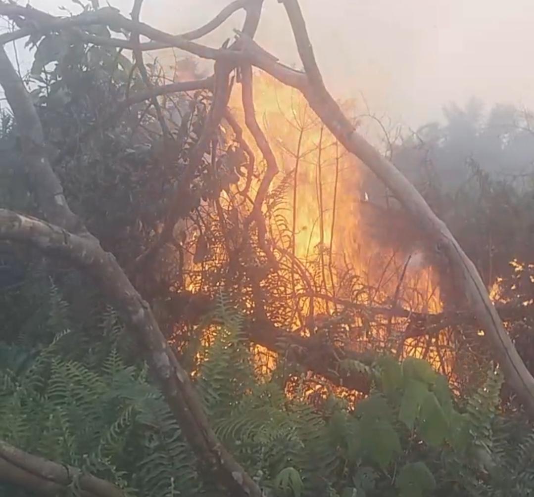 Kebakaran Lahan Terjadi di Desa Sinar Wajo